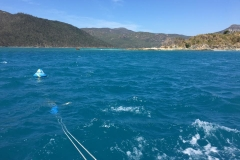 10th Sep 2018 Whitsunday Dive Academy 2